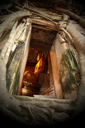 ayutthaya: Buddha in the church is covered with trees it. It is a place famous in Thailand.