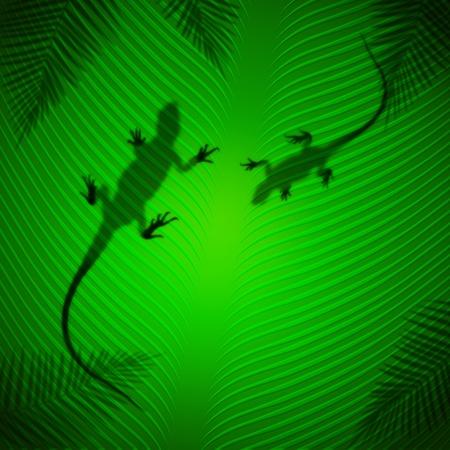 Dragon shadow on banana leaf in the tropical sun photo