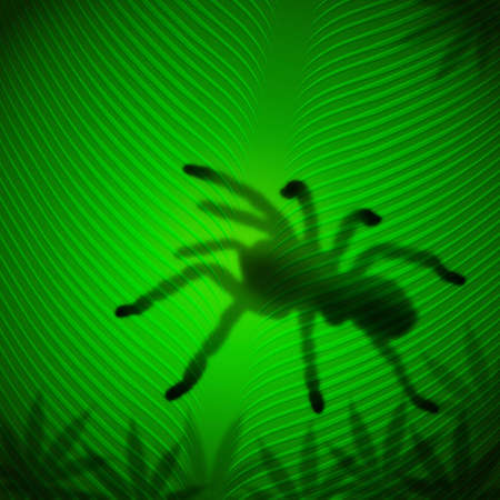 Spider shadow on banana leaf in the tropical sun Stock Photo