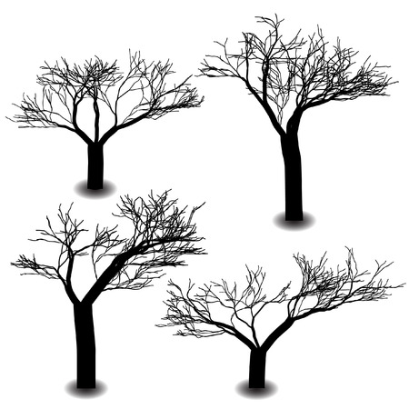 deciduous: A silhouette is the image of a person, an object or scene represented as a solid shape of a single colour, usually black, its edges matching the outline of the subject.
