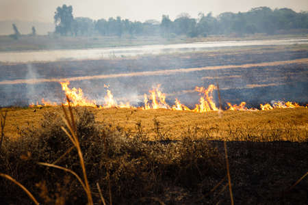 The field fires were caused by the negligence of throwing cigarette butts in the fields. wildfire, forest fire, burning forest, field fire, Standard-Bild