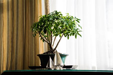 A Bonsai tree with pewter sailboats. Stock Photo