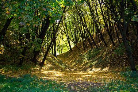 trees of Kolomenskoye park in autumn, Moscow, Russia Stock Photo - 4382190