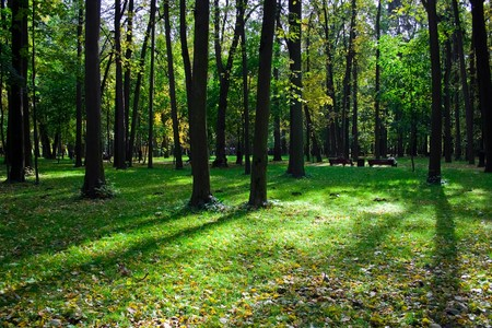 A sunny day in green park with high trees Stock Photo - 4382189