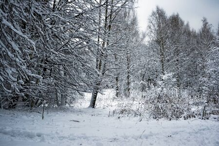 winter forest under white snow, Moscow, Russia Stock Photo - 4502158