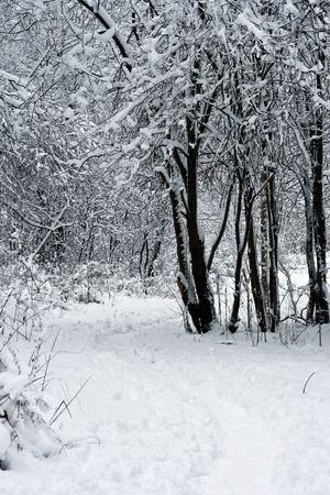 forest under white snow in winter, Moscow, Russia Stock Photo - 4672537