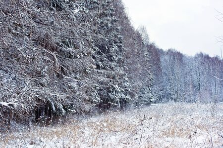 winter forest under white snow, Moscow, Russia Stock Photo - 4727711