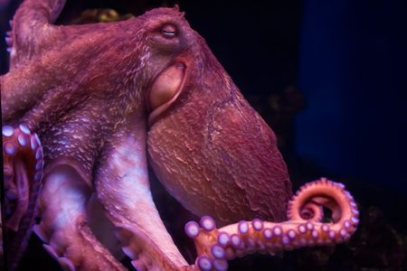 Nice smiling octopus deep under water photo