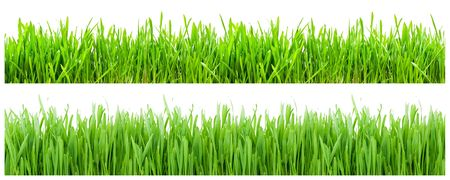Two types of green grass on white background Banque d'images