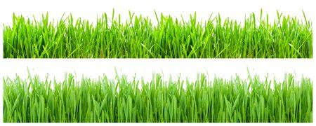 Twee soorten groen gras op witte achtergrond