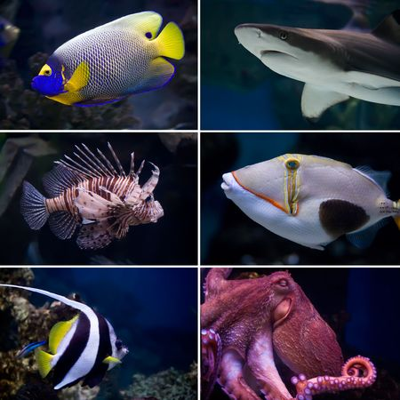 Beautiful tropical fish collection Banque d'images