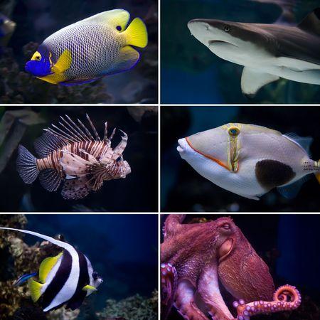 Prachtige tropische vissen collectie Stockfoto