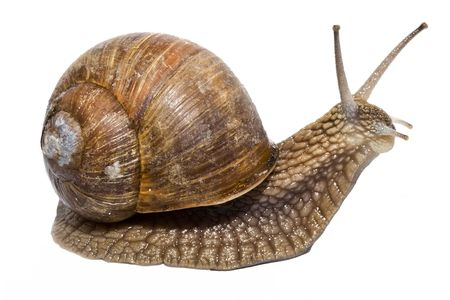 Funny snail on a white background