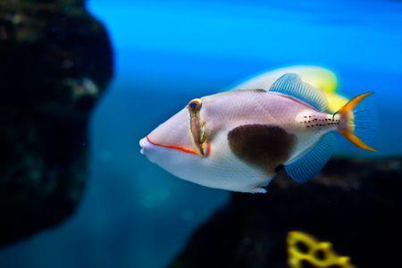 exotic fish: Beautiful pesci esotici Archivio Fotografico