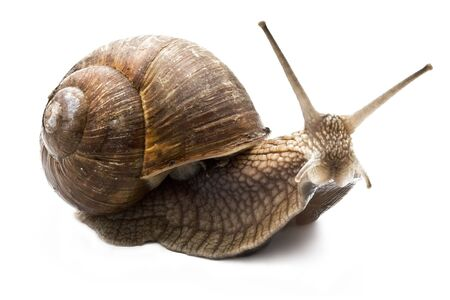 mucus: Funny snail on a white background