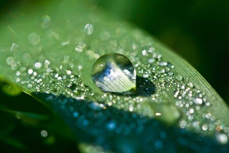 Close up view of dew drops on a plant Stock Photo - 5217349