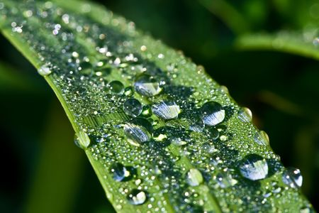 refreshed: Close up view of the dew water drops on a plant