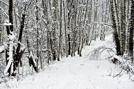 Winter forest under white snow Stock Photo - 6267146