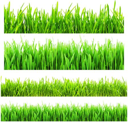 Four types of green grass isolated on a white background