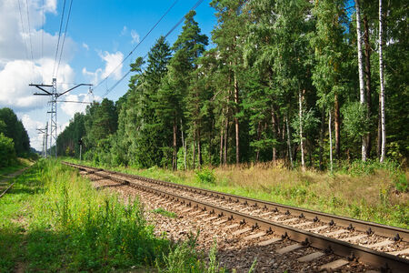 forest railroad: Beautiful landscape of railroad in summer forest
