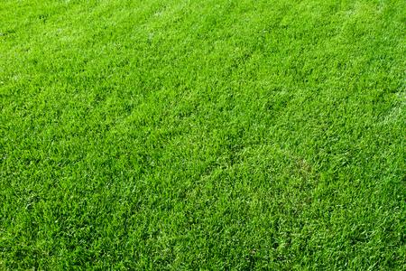 Green lush grass background under bright sunlight Stock Photo