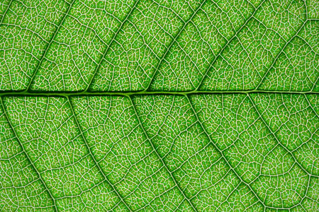Nice macro photo of big green leaf photo