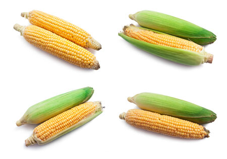 Fresh ripe corn isolated on white background Stock fotó