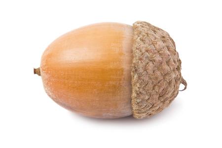 Beautiful macro photo of acorn, isolated on white background