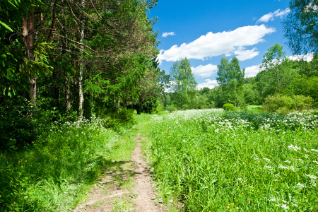 Green forest and meadow under blue sky Stock fotó
