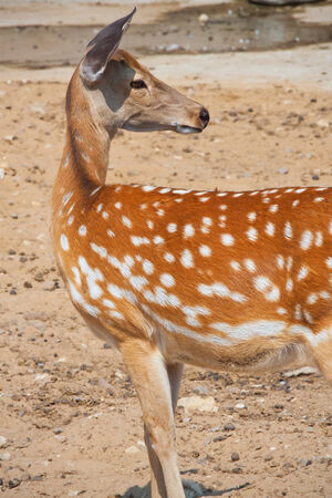 Close up photo of nice young deer in zoo