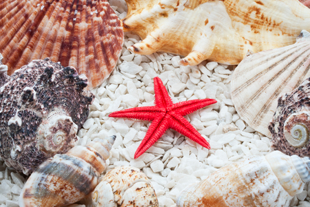 Background made from tropical seashells on sandy beach Stock fotó