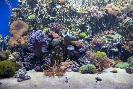 Tropical sea coral reef