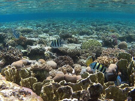 reef fish: colourful reef fish