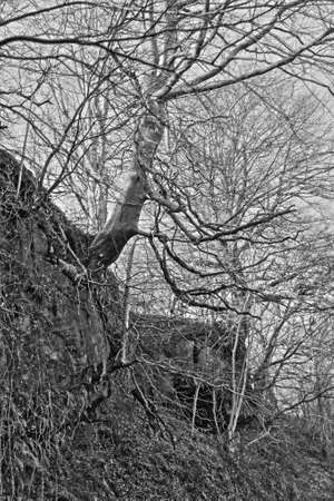 clinging: Trees procuriously clinging onto a rocky hillside. B&W Stock Photo