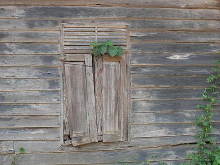 Broken old windows have not been used for a long time. Reklamní fotografie