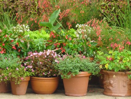 Potted Plants Imagens - 366425