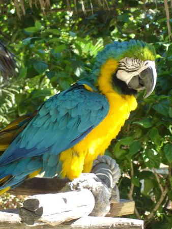 squawk: Colorful Parrot