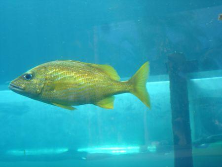 Yellow Fish Stock Photo - 366259