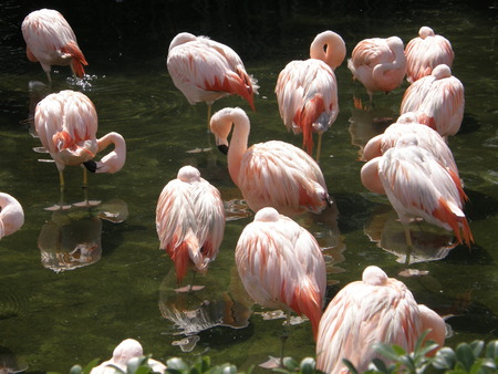 Flamingo Stock Photo - 1447339