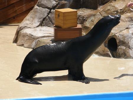 Playful Seal photo