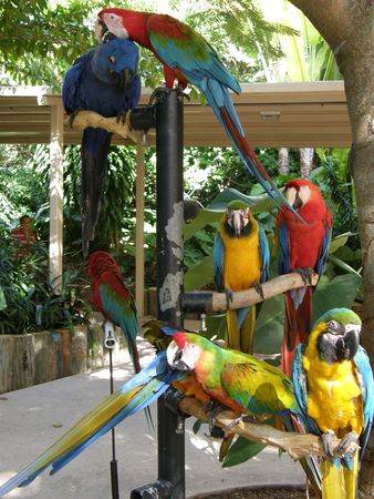 squawk: Colorful Parrots