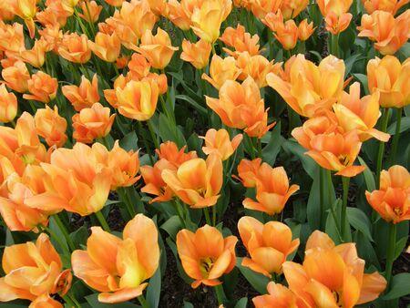 Yellow Flowers Stock Photo - 4860362