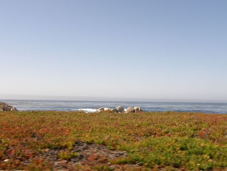 oceanic: Carmel by the Pacific Ocean in California