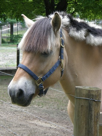 Horse Stock Photo - 7518712