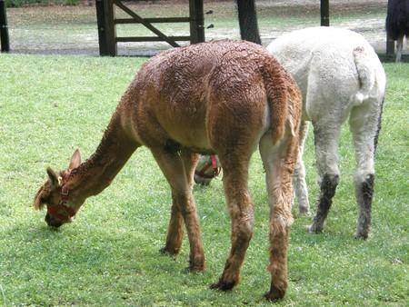 Farm Animals Stock Photo - 8043948