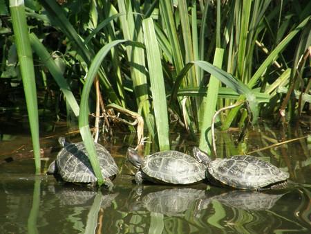 Tortoise Turtle photo