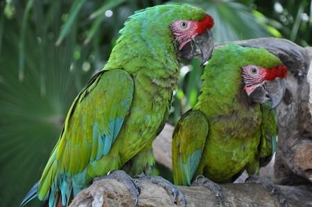 Perroquets verts Banque d'images - 7928949