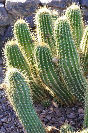 Cactus Stock Photo - 8429732