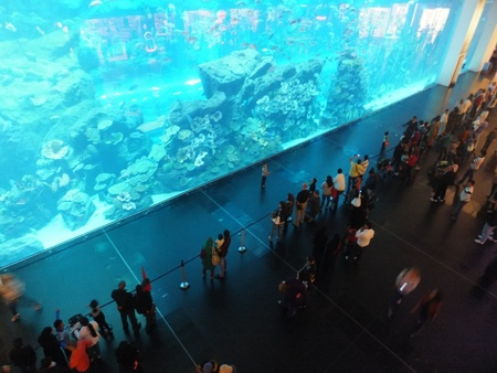 DUBAI, UAE - DECEMBER 25: View of the aquarium at Dubai Mall in Dubai, on Decemebr 25, 2011. It is the largest indoor aquarium in the world at a length of 50 meters.
