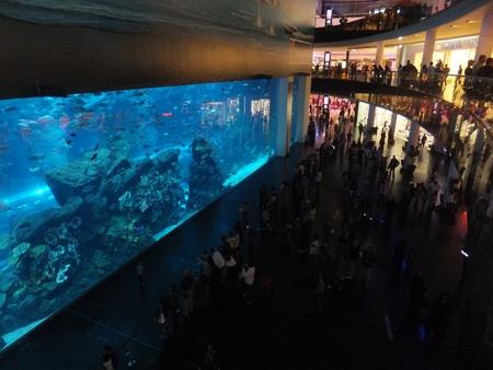 the largest: DUBAI, UAE - DECEMBER 25: View of the aquarium at Dubai Mall in Dubai, on Decemebr 25, 2011. It is the largest indoor aquarium in the world at a length of 50 meters.